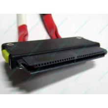 SATA-кабель для корзины HDD HP 451782-001 459190-001 для HP ML310 G5 (Братск)